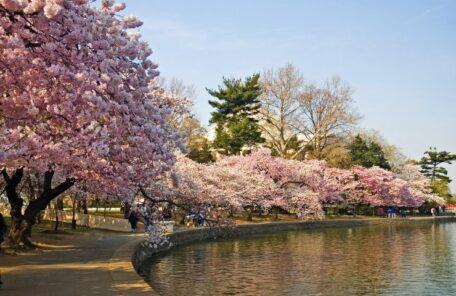春までもう少し‼今から計画したい観光もお花見も韓国らしさも楽しめる韓国ソウルのお勧めポットをご紹介します♪